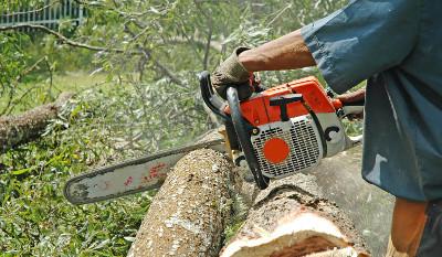 Elagage, abattage et démontage d'arbres sur l'ile de Ré